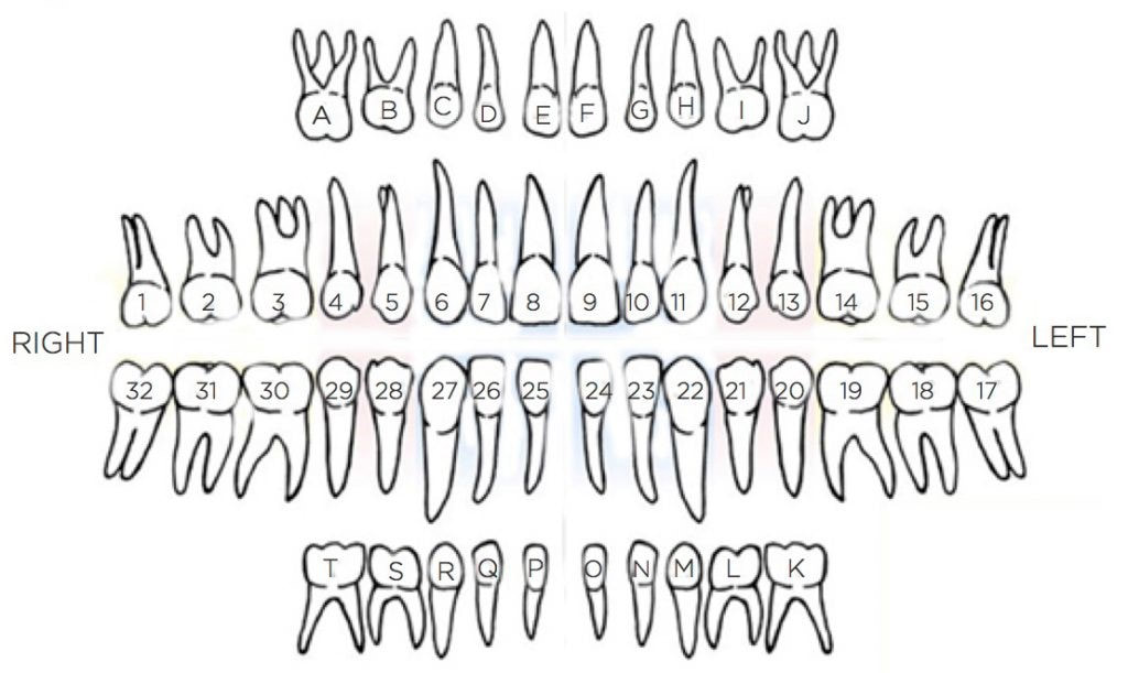 teeth letters and numbers